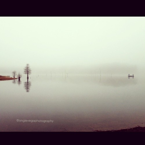 Fog for the day. #iphonesia #charlies_pop #northcarolina #TAGSTAGRAM.APP #landscape #landscapes #landscapestyles_gf #fabscape #ic_landscapes #igcentric_nature #landscape_lovers #landscapelovers #landscapelover #paisaje #paisagem #paysage #epic #beautiful #tagsta_nature #tagsta #tagstagramers #latergram #instahub #view #insta_land #awesome_shots #instaworld_love #igphoto #goodday #clubsocial  (at Falls Lake Trail)
