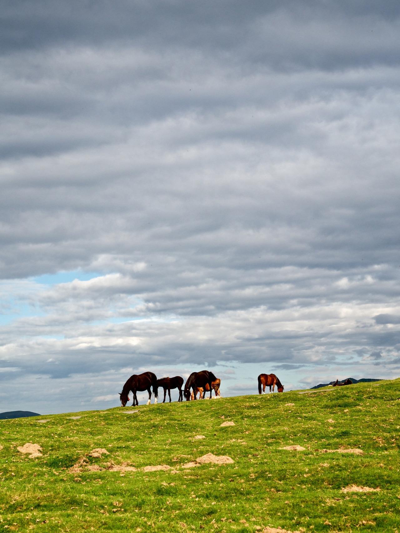 Horses. Navarra (Spain)