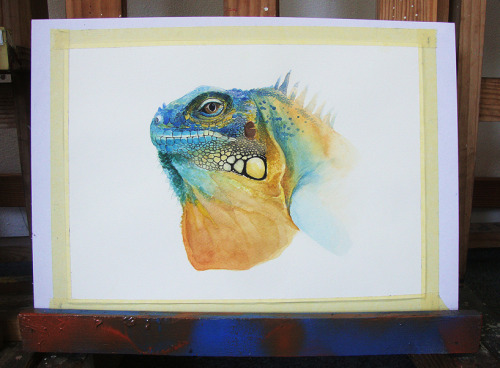 veelopesciraptor:  Iguana ( watercolor - A3 ) for Scientific Illustration class