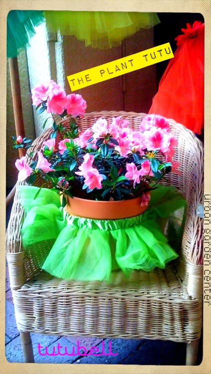 Meet the Plant Tutu at the Urban Garden Center! For the fashionable gardenista… by Tutubell #Plant Tutu