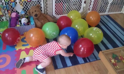 Investigating his first pile of birthday balloons!