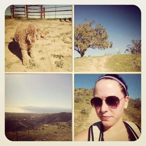Amazing day to hike to two trees with Bear! Too bad @mskellylynn decided to sleep! Lol 😁🐶🌳🌳☀#twotrees #hike #sundayfunday #nature #ventura