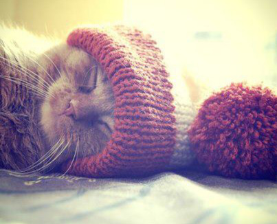 myhipster-bullshit:  kitty | via Facebook on We Heart It - http://weheartit.com/entry/57984594/via/timeforsummer Hearted from: http://www.facebook.com/Nejla.Selma?fref=ts