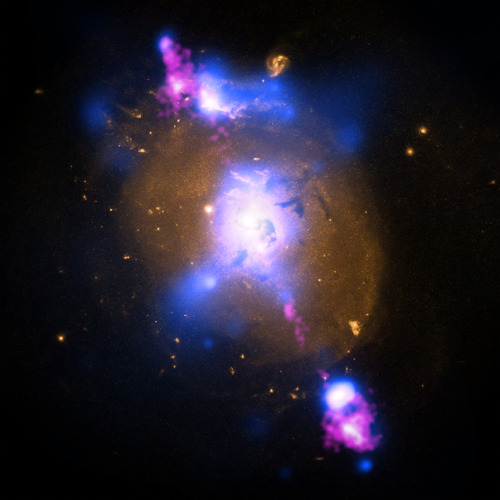 ikenbot:  Black Hole Powered Jets Plow Into Galaxy  This composite image of a galaxy illustrates how the intense gravity of a supermassive black hole can be tapped to generate immense power. The image contains X-ray data from NASA's Chandra X-ray Observatory (blue), optical light obtained with the Hubble Space Telescope (gold) and radio waves from the NSF's Very Large Array (pink). This multi-wavelength view shows 4C+29.30, a galaxy located some 850 million light years from Earth. The radio emission comes from two jets of particles that are speeding at millions of miles per hour away from a supermassive black hole at the center of the galaxy. The estimated mass of the black hole is about 100 million times the mass of our Sun. The ends of the jets show larger areas of radio emission located outside the galaxy. The X-ray data show a different aspect of this galaxy, tracing the location of hot gas. The bright X-rays in the center of the image mark a pool of million-degree gas around the black hole. Some of this material may eventually be consumed by the black hole, and the magnetized, whirlpool of gas near the black hole could in turn, trigger more output to the radio jet. Most of the low-energy X-rays from the vicinity of the black hole are absorbed by dust and gas, probably in the shape of a giant doughnut around the black hole. This doughnut, or torus blocks all the optical light produced near the black hole, so astronomers refer to this type of source as a hidden or buried black hole. The optical light seen in the image is from the stars in the galaxy.