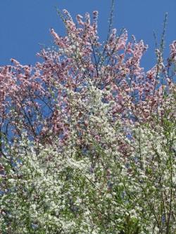 Frühling 14