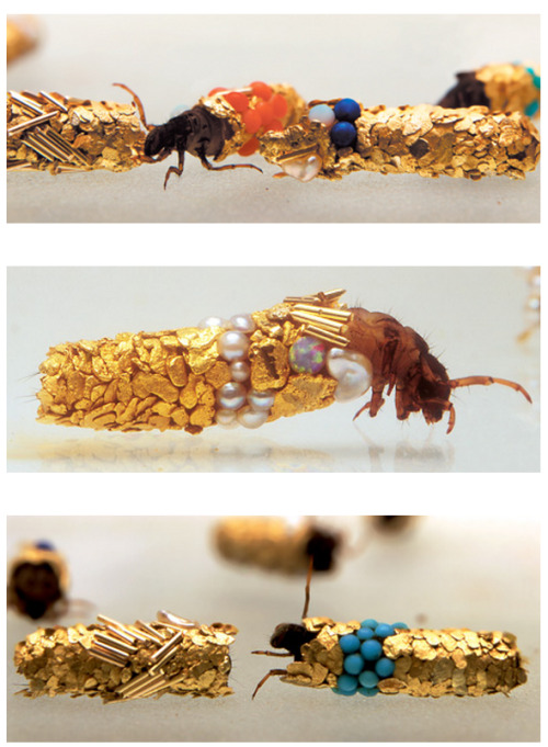 "Caddisfly larvae construct silk cases decorated with pieces of gravel, sand, twigs, snail shells, and other natural debris. This most often happens during winter months, so the theory behind this behaviour is that they do it to protect themselves from the cold, harsh weather. However if you're a Caddisfly larvae in the care of French artist Hubert Duprat, you'll have an entirely different supply of materials with this to create your protective case:  Duprat ""introduced beads, pearls, turquoise, and 18-karat gold pieces into their environment and let them construct tiny gilded sculptures. Duprat has been collaborating with the larvae since the 1980s. Learn more about his work at Cabinet Magazine.""  Photos by Jean-Luc Fournier via Cabinet [via Laughing Squid]"