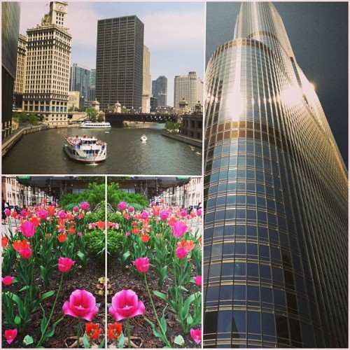Lookin good chi-town 😻👍 #chicago #summer #citylife #flowers #ineedaboat  (at Chicago Riverwalk)