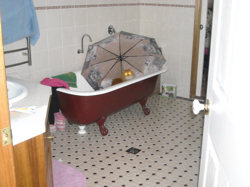 under an umbrella while in the bath? i think that's a little counter-productive cat…