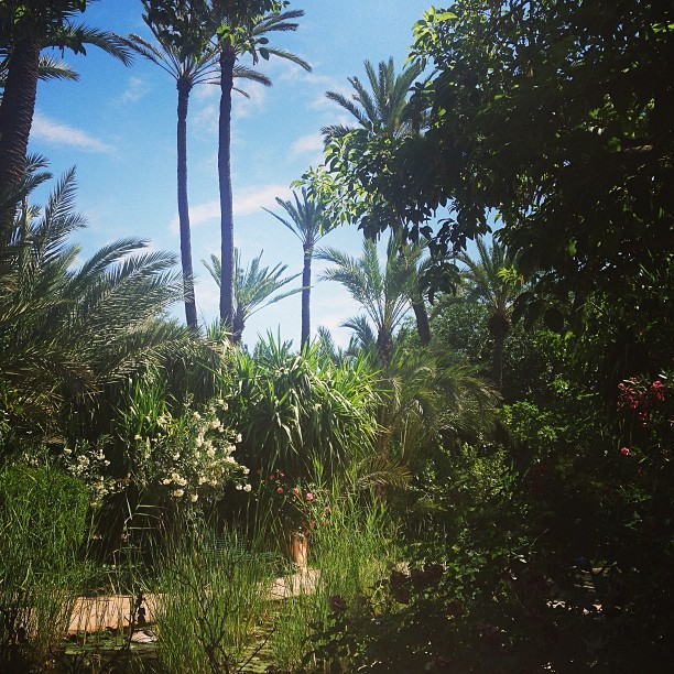 Palmeraie, palm trees playing with the luxury vegetation @lesdeuxtours