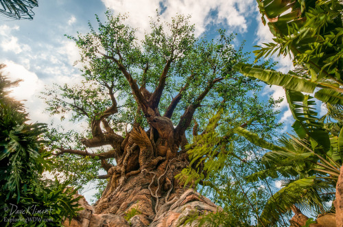 Lost View of The Tree of Life (by Dave Kliment | ExploringWDW)