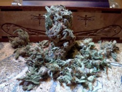 My weed photography. :3