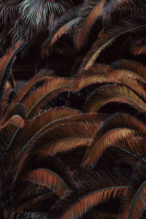 palm fronds palm brown