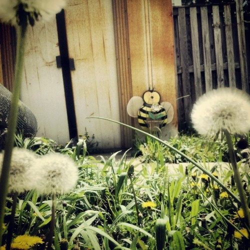#gazing through the #beautiful #dandilion #landscape at the #rustic #metal #bumble #bee by the #old #rusty #shed #standing with #pleasure and #glee in the #afternoon #sun (at dc destination with brother matthew!)