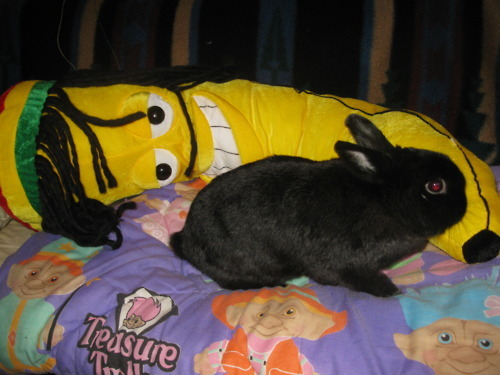 This is a picture of a bunny with a rasta banana on a Troll bedspread. All of my dreams have come true.  tvia
