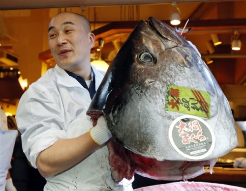 Japan bluefin tuna sells for record $1.76 million (Photo: Kimimasa Mayama / EPA) A bluefin tuna sold for a record $1.76 million at a Tokyo auction Saturday, nearly three times the previous high set last year — even as environmentalists warn that stocks of the majestic, speedy fish are being depleted worldwide amid strong demand for sushi. Read the complete story.