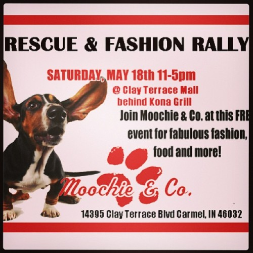 In the indianapolis area?! Come see us!! #bostonterrier