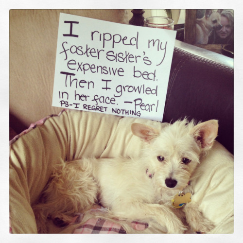 "Adoptable Fridays - Pearl""I ripped my foster sister's expensive bed. Then I growled in her face. PS–I regret nothing.""…View Post"