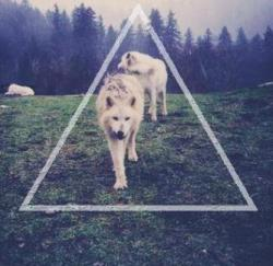 ghuofdguifbgu:  Untitled Album on We Heart It. http://weheartit.com/entry/58591703/via/AvadaKadavraBro