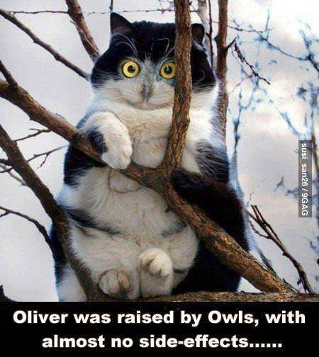 9gag:  Oliver was raised by owls