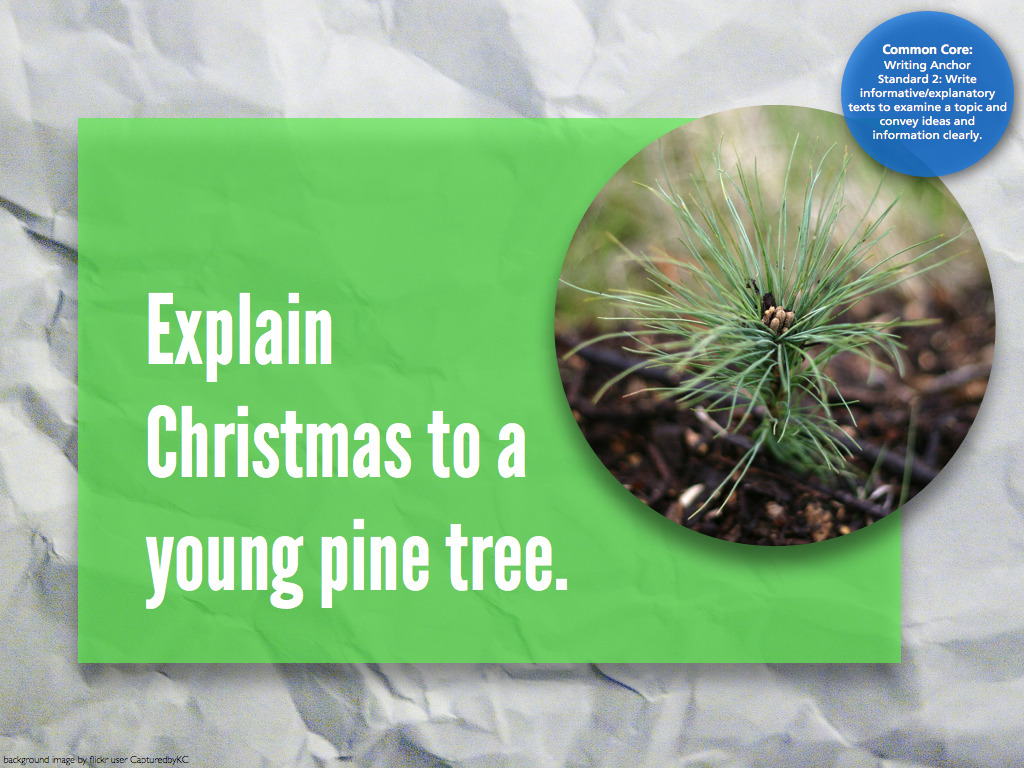 #734 explain Christmas to a young pine tree