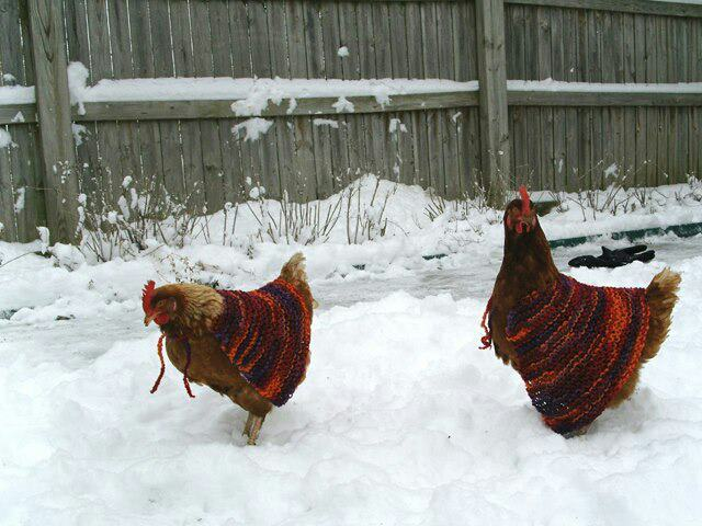 Chicken capes = awesomeness.