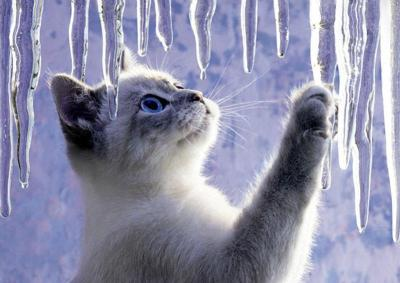 llbwwb:  Winter Cat by Picturegirl.