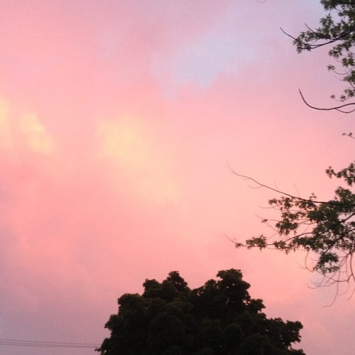Pink Clouds #pinkclouds #pink #clouds #sky #clouds #sunset