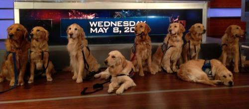 K-9 Comfort Dogs stop by NBC Nightly News