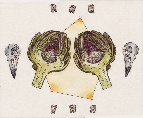 artichoke watercolor//pen & ink and watercolor//12x14//2013