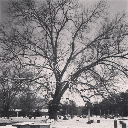 "treeporn:  ""Giant oak (I think) in a Franklin, TN cemetery sheltering Revolutionary War veterans."" Taken/Submitted by: mottage.tumblr.com"