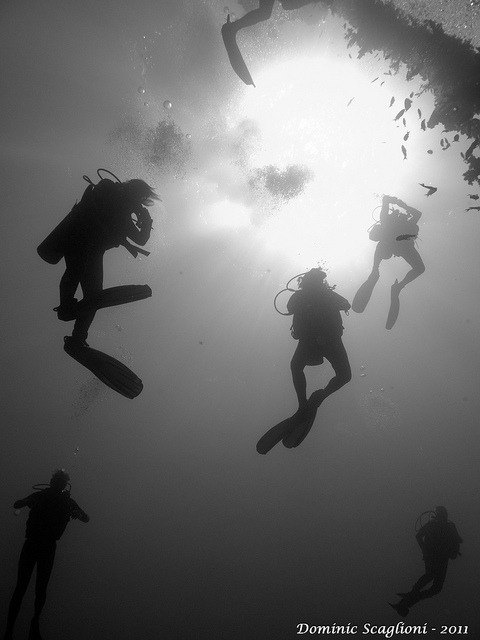 Chain Divers by Dominic Scaglioni on Flickr.