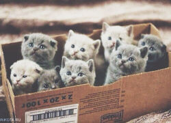 kitty photography animals cute adorable hipster vintage indie cats kitten animal nature