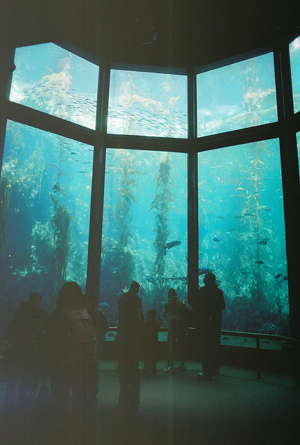 vacants:  (by koe.inlow)  MB Aquarium love u