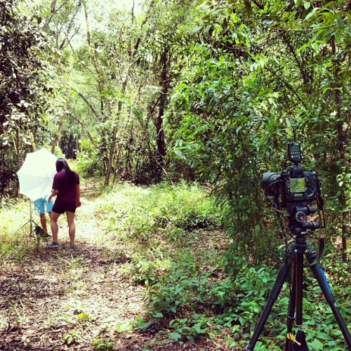 Setting the #scene. #photoshoot #bts #forest #singapore #camera #strobe