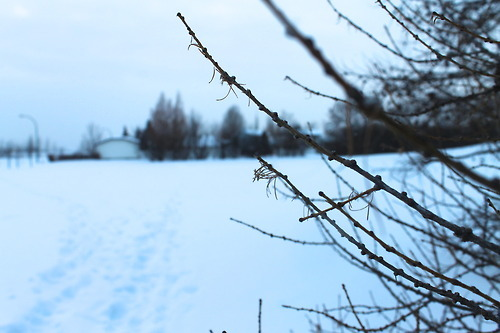 winter photography done by urs truly!