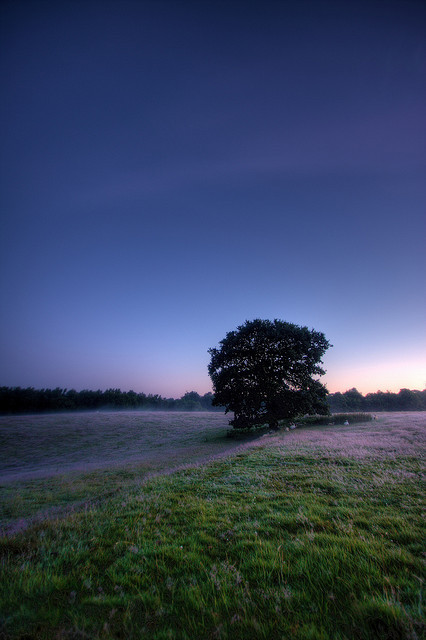 glowing-clouds:  Kentish sunrise by Wilfried.B on Flickr.