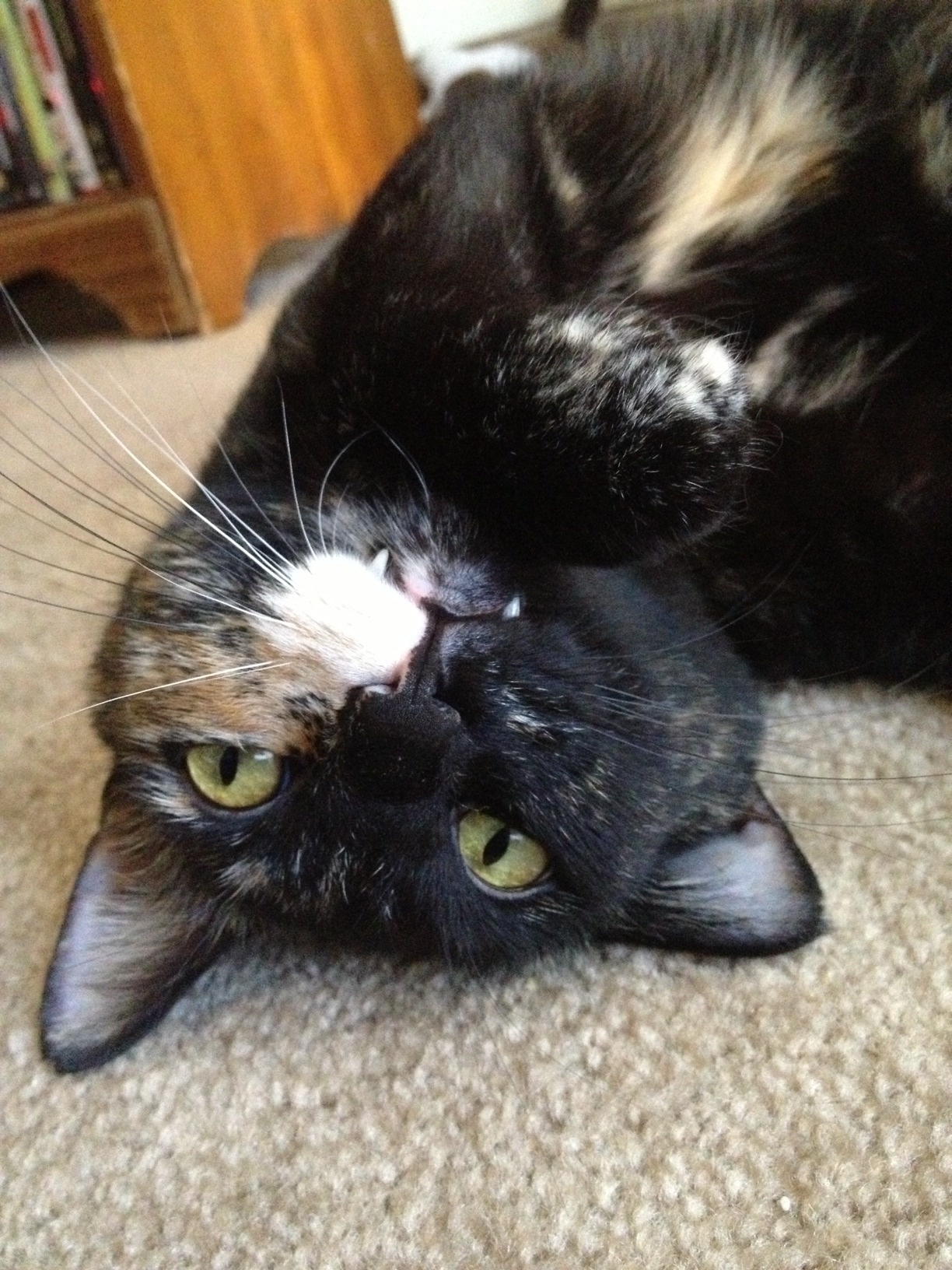 Vampurr Photo via derpy cats