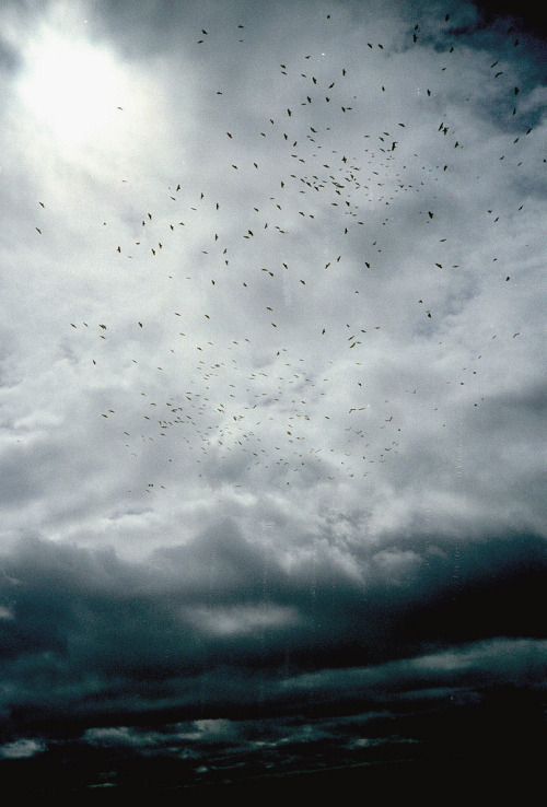 "troubled:  ""crows' sky"""