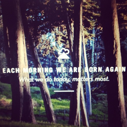 Making the Most, Always. #lostinthewood #wetransferdocet #wetransfer #quotes #lifeisnow #dontwasteaday #makethemost (at Woodland)