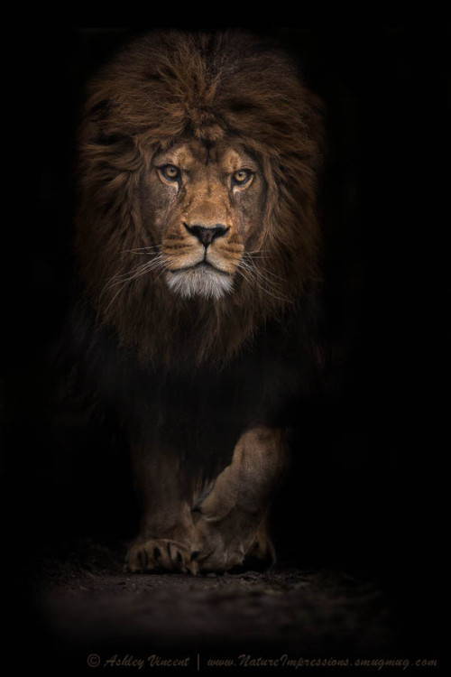 "magicalnaturetour:  ""The Survivor"" by Ashley Vincent"