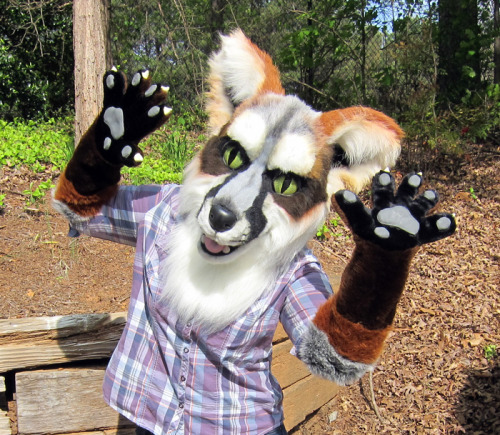 Foxie says holla! It is for auction until middle of the day Friday. AUCTION LINK: http://www.thedealersden.com/auction_details.php?name=gray-fox-partial-suit-by-lobitaworks&auction_id=113251 Video link: http://www.youtube.com/watch?v=Yp3RweHyKyA&feature=youtu.be The starting bid is at almost a 50% discount to what this would have cost to commission. :3