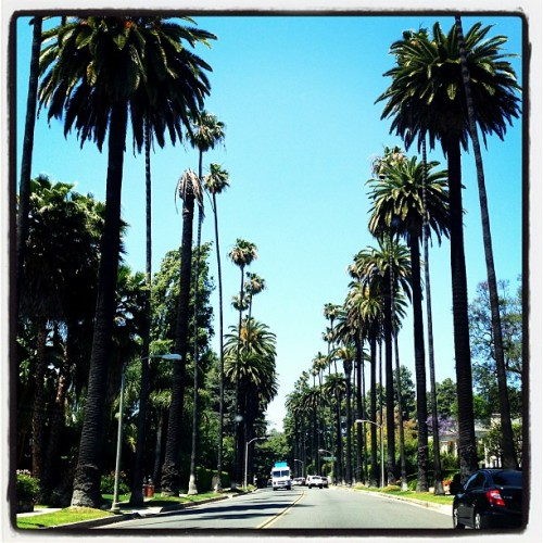 The street leading up to my house is So LA! But I love it. It's beautiful and instantly relaxes me… #californiadreaming