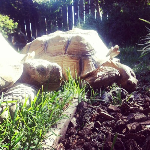 No big deal, just having a party with my fellow herbivores #vegansofig #poweredbyplants