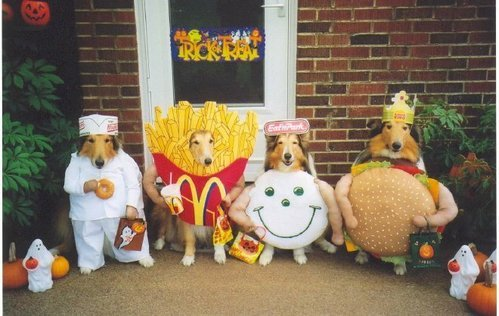 diannedj:  imapunk: i wish i had this many pets to recreate the mcdonalds menu! SO CUTE! :D  aww.. SO CUTE indeed! :D They look curious on maybe how people enjoy looking at them. ;p So adorable. ;)