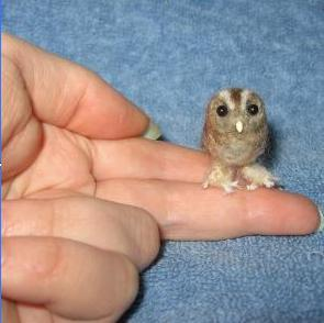 supercute:  This owl is smaller than your finger.  Your argument is invalid. (via pie0)(via dailyowl)