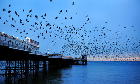 "Captioned ""A murmuration of starlings over Brighton Pier at sunset"", Linda Nylind's photo illustrates Jonathan Glancey's piece on the return of the seaside pier in The Guardian."