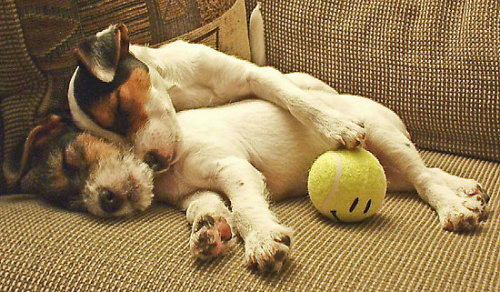 iamblessed: Best Buds… all tuckered out