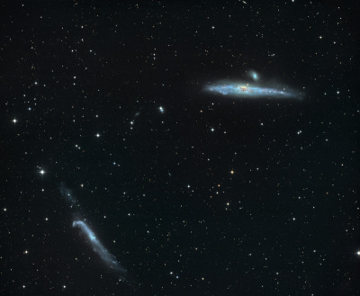 NGC 4631 is a big beautiful spiral galaxy  seen edge-on (top right) only 25 million light-years away towards the small northern constellation Canes Venatici.  This galaxy's slightly distorted wedge shape suggests to some a cosmic herring and to others the popular moniker of The Whale Galaxy.  Either way, it is similar in size to our own Milky Way.  In this gorgeous color image, the Whale's dark interstellar dust clouds, yellowish core, and young blue star clusters are easy to spot.  A companion galaxy, the small elliptical NGC 4627, appears above the Whale Galaxy.  At the lower left is another distorted galaxy, the hockey stick-shaped NGC 4656.  The distortions and mingling trails of gas detected at other wavelengths suggest that all three galaxies have had close encounters with each other in their past.  The Whale Galaxy is also known to have spouted a halo of hot gas glowing in x-rays.