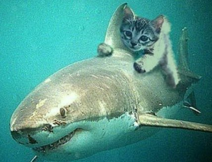 Can a Shark ride a Cat? Don't think so.