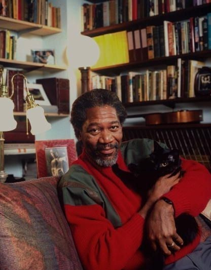 (via annahatesbananas) Morgan Freeman cat